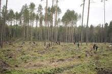 Обезлесение в России. Участок, пострадавший от короеда в Калужской области