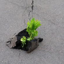 Сила природы (9 фото)