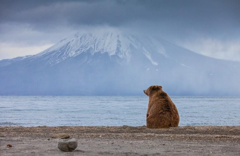 Медведь на Камчатке | Лучшие фото мира