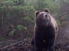 Хранители леса, 6 фото