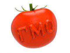 Гибель от ГМО: первый официальный случай