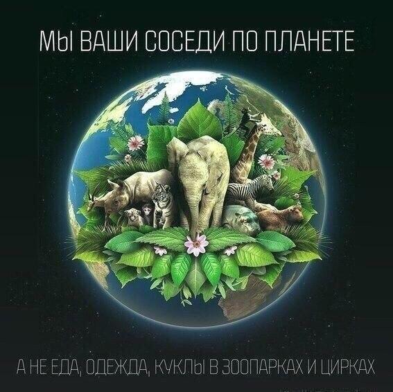273 vq1QMGv4zAQ - СветВМир.ру - Интересный познавательный журнал. Развитие познания - Мы - ваши соседи по планете, а не...