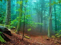 20 фактов о лесе