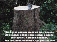 Эта белка раньше жила на этом дереве…