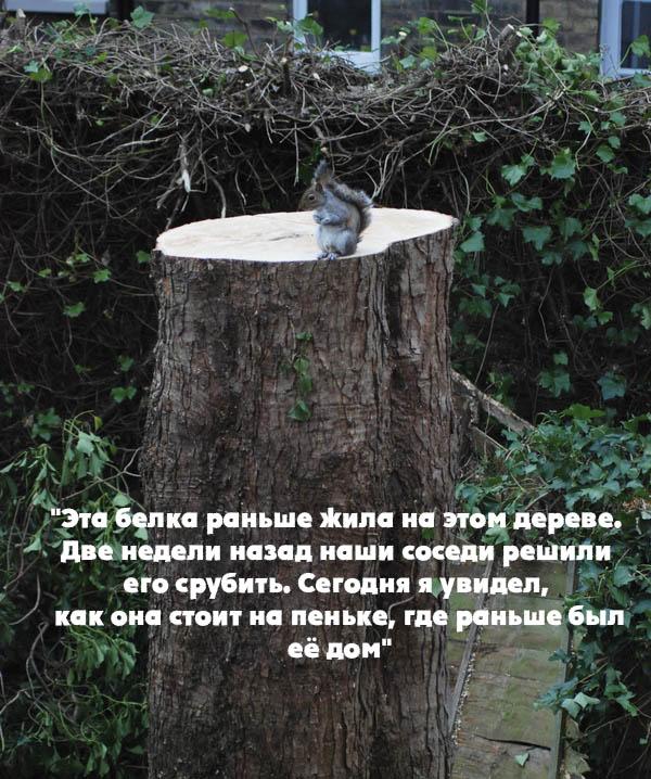 1 - СветВМир.ру - Интересный познавательный журнал. Развитие познания - Эта белка раньше жила на этом дереве...