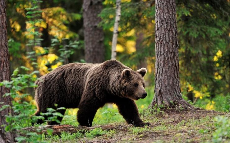 Берлога медведя изнутри