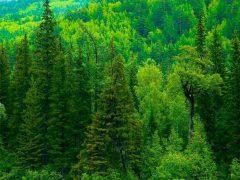 Зачем леса на планете?