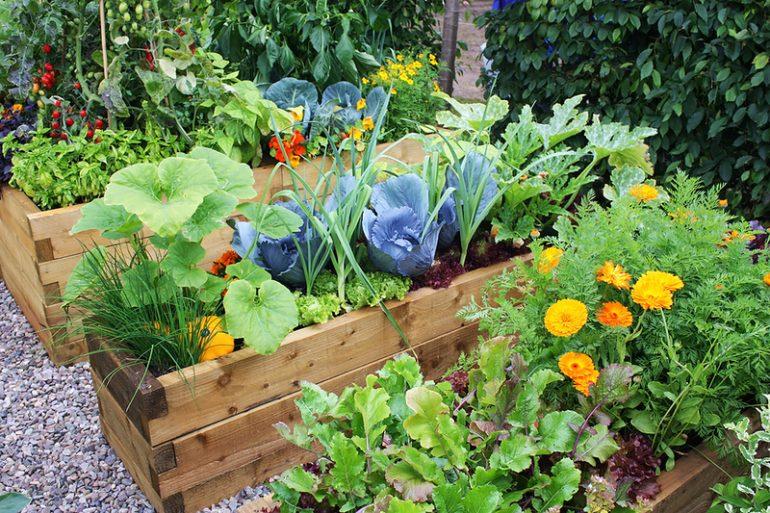 Как посадить в саду всё так, что бы само росло не требуя ухода?