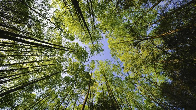 Деревья не только украшают ваше местообитание, очищают воздух и защищают почву от эрозии, но и...