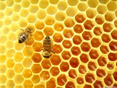 Термины и определения пчеловодства