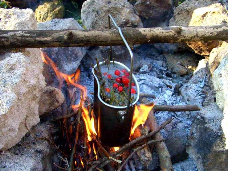 Лесной чай: как делать и из чего