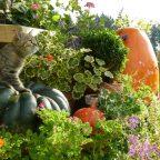 Совместимость/несовместимость растений | Дружба и вражда растений | Какие растения наиболее требовательны к поливам