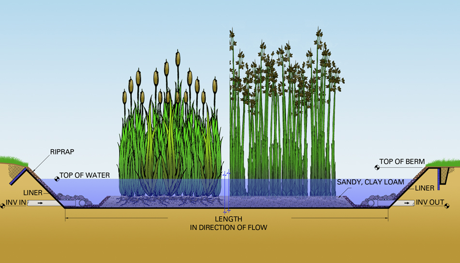 constructed wetlands 5 - СветВМир.ру - Интересный познавательный журнал. Развитие познания - Очистка воды болотом