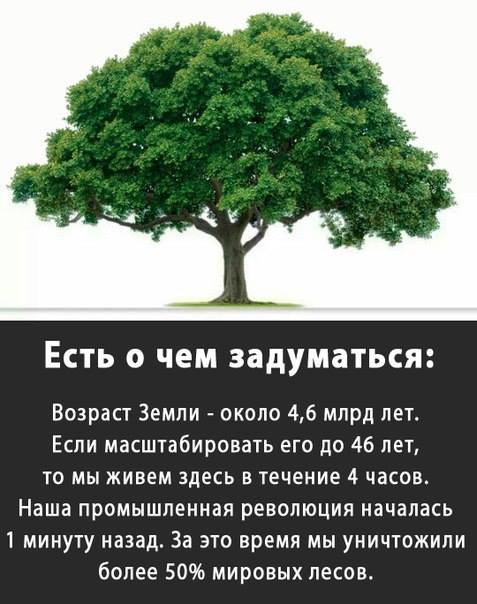 """""""Мы уничтожили более 50% мировых лесов"""""""