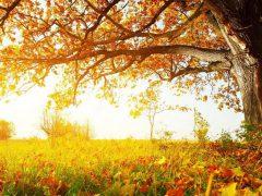 Опадающая листва – отличное удобрение!