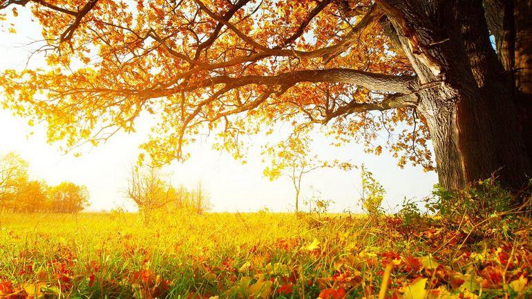31 - СветВМир.ру - Интересный познавательный журнал. Развитие познания - Опадающая листва - отличное удобрение!