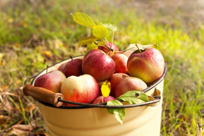 """Притча """"Сосед и ведро с яблоками"""""""