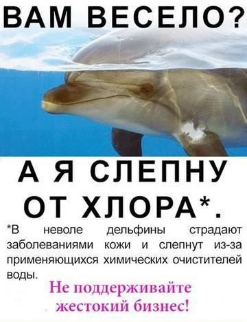 Дельфины в тюрьме