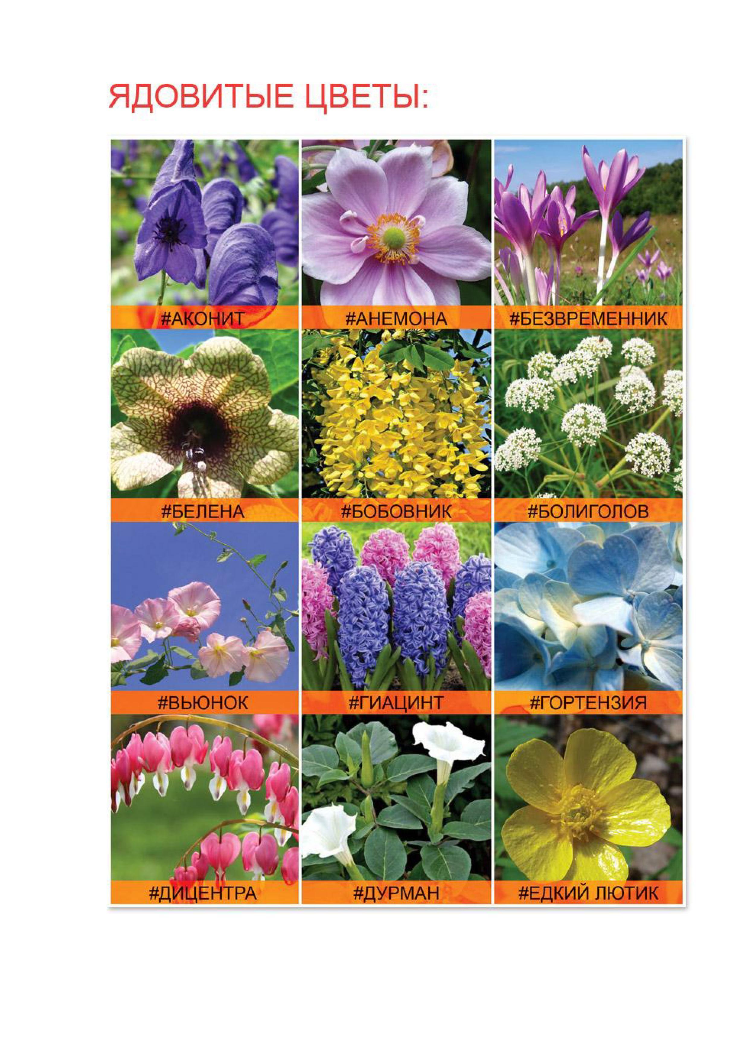 Как сажать цветы хризантемы
