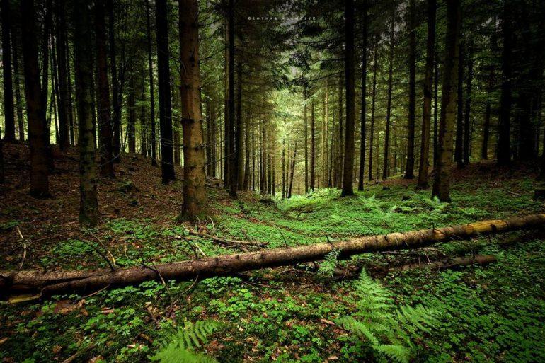 les new 2 - СветВМир.ру - Интересный познавательный журнал. Развитие познания - Что происходит, когда вырубают леса