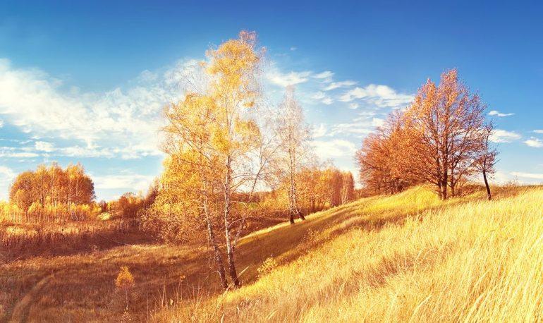 Россия, поле, берёзы