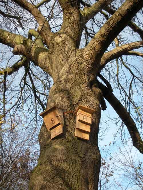 Домик для летучих мышей на дереве