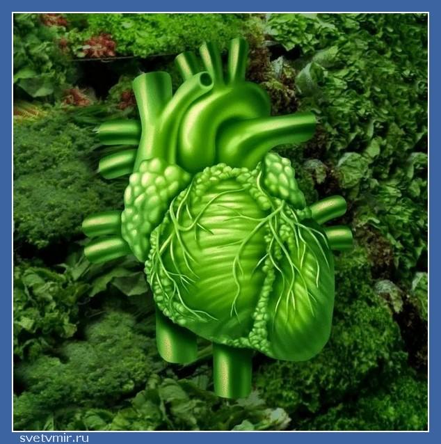 """RyUBUZcYhVY - СветВМир.ру - Интересный познавательный журнал. Развитие познания - """"Пища может причинять вред, производя болезнь, а может излечивать и держать тело в идеальном состоянии"""""""