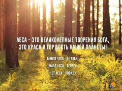 Много леса – не губи, мало леса- береги (картинка)