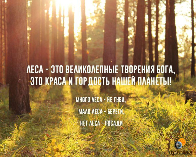 Много леса - не губи, мало леса- береги (картинка)