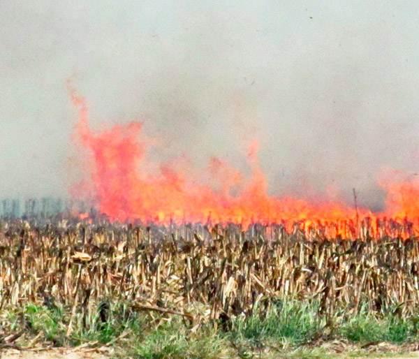 LvRuXUh GCU - СветВМир.ру - Интересный познавательный журнал. Развитие познания - Венгрия уничтожает все поля с ГМО-кукурузой компании Monsanto