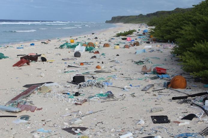 Credit Jennifer Lavers East Beach 2 sm - СветВМир.ру - Интересный познавательный журнал. Развитие познания - Пластик. Природа. Вред