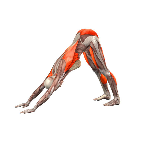 5 упражнений Поля Брэгга для восстановления позвоночника