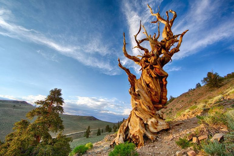13 причин любить деревья