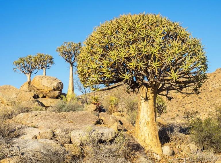 1619751525174468045 - СветВМир.ру - Интересный познавательный журнал. Развитие познания - Три самых необычных дерева планеты